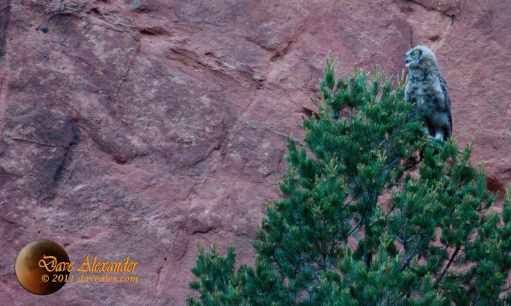 Garden of the gods owls
