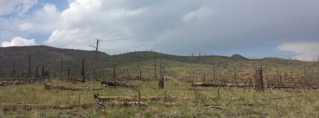 Wigwam area is in the heart of the Hayman Fire burn area.  This is 12 years later (to the day).