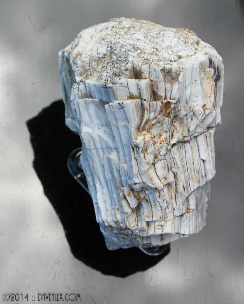 I love the detail on this piece of petrified wood