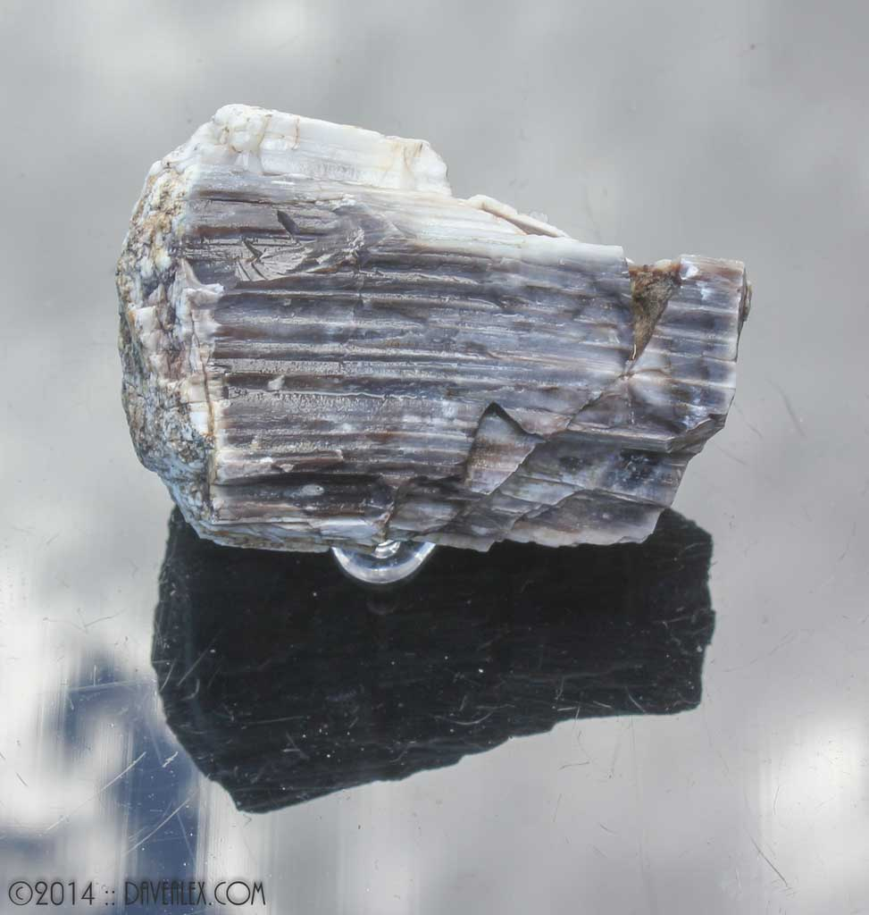Agatized petrified wood