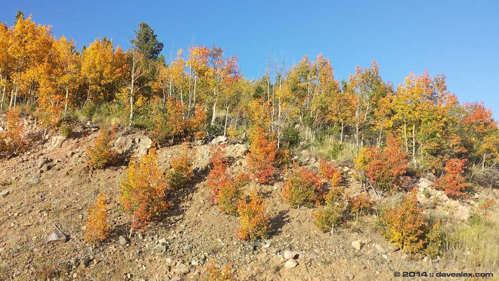 Gotta love the fall colors while enjoying the forest and rockhounding in Colorado!
