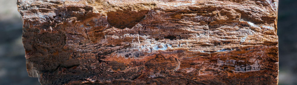 Palmer Divide Petrified Wood