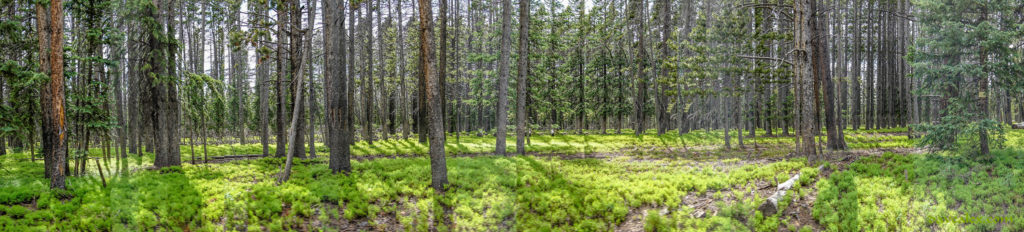 Interesting forest panorama